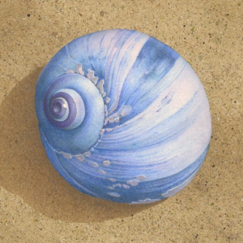 DETAIL - BLUE SHELL ON BROWN BEACH