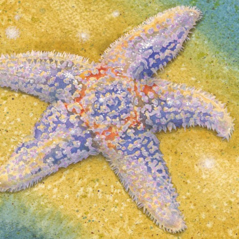 DETAIL - JEFFERSON STARFISH